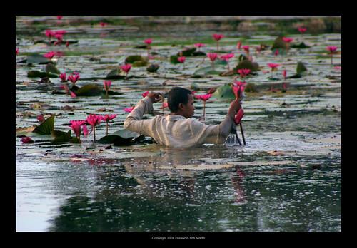 travel pink flowers man water wow cambodia searchthebest siemreap angkor soe supershot ysplix theunforgettablepictures siemreapangkor jpeggy florenciasanmartin ©mariaflorenciasanmartindekrasukallrightsreserved copyrightflorenciasanmartinallrightsreserved florenciasanmartinbrück