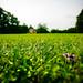 Green Grass Rawks! by Voetmann