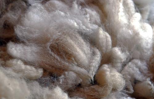 alpaca wool close
