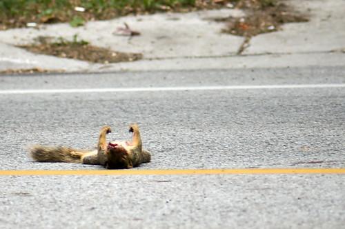 Flickriver Random Photos From Dead Squirrel Pool