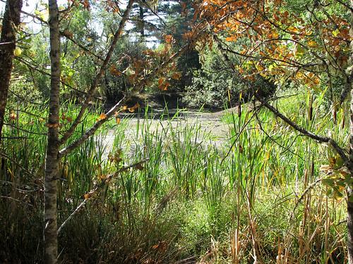 dry beelerpond brooktrails