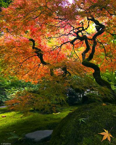 jap_garden_oct3-2