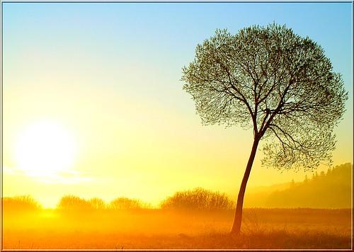 trees sun tree sunrise landscape puu puud päike morningfog maastik päikesetõus olympuse400 challengeyouwinner welcometoestonia topofthefog colorphotoaward superaplus aplusphoto infinestyle theunforgettablepictures janne4janne vanagram väljasonniivastikilm midagipealekoleilmaeijääpildile agakoleilmapildidvõivadjukailusadolla kevadelpildistatud