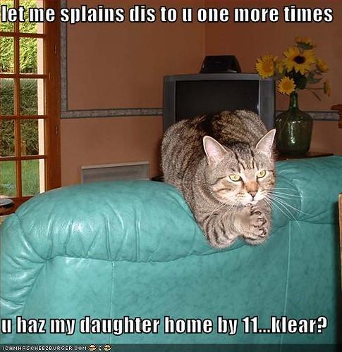 3059100019 bd1834ac6d funny cats a 016