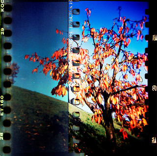 Fall tree - Holga 2x sprocket holes