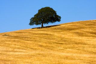 Destination of a tree....