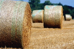 agriculture, straw, hay, field, grass, plant,