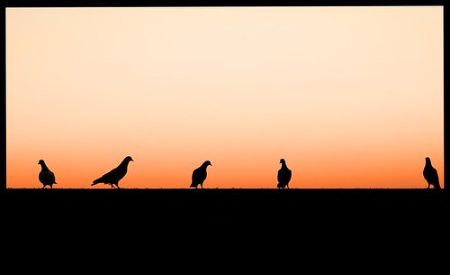 pink sunset sky orange black bird beautiful birds silhouette night standing evening wings waiting quiet dusk five horizon feathers silhouettes line heads gradient even fade outline creatures beaks