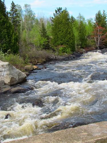 trees water river rocks rapids greenlake