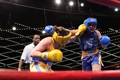 Daily News Golden Gloves Boxing