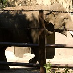 Los Angeles Zoo 068