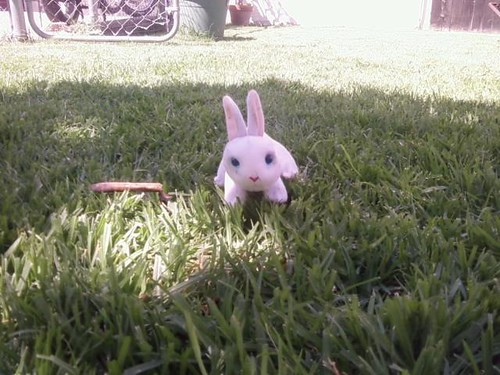 Fwd: mr bunny dog toy