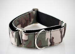 brown, collar, dog collar, strap, belt,
