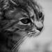 Small photo of Petit Chat