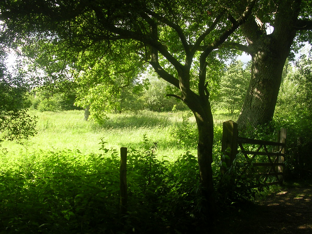 Scene Ashurst to Hartfield