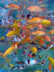 ryby akwariowe sklep