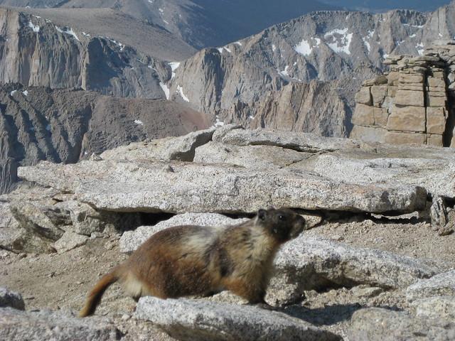 Marmot | just b.CAUSE
