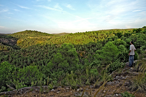 Bosque mediterr neo ubecaria la tierra de pablo ubecar for Arboles de hoja perenne para clima mediterraneo