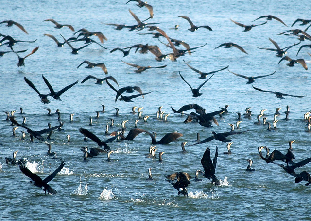 Birds over Israel's Sea of Galilee