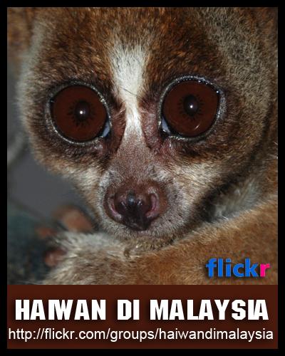 Haiwan di Malaysia