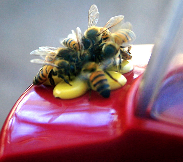 The Honeybees Are Having a  Picnic! Everyone Is Welcome
