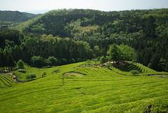 agriculture, shrub, field, mountain, valley, hill, hill station, highland, green, natural environment, plateau, terrace, meadow, landscape, pasture, vegetation, rural area, grassland, plantation, mountainous landforms,