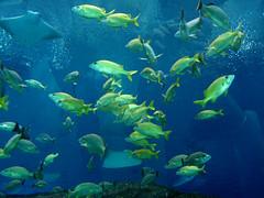 The fish school