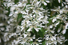 blossom(0.0), rosemary(0.0), wildflower(0.0), produce(0.0), edelweiss(0.0), evergreen(1.0), shrub(1.0), flower(1.0), branch(1.0), tree(1.0), plant(1.0), herb(1.0), flora(1.0), spring(1.0),