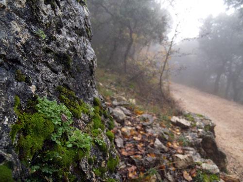 Bosque Encantado, Font Roja