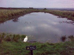 Pond at Whitby Abbey