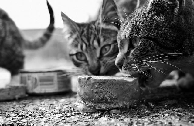 mmm, cat food