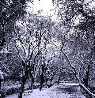 black white snow trees