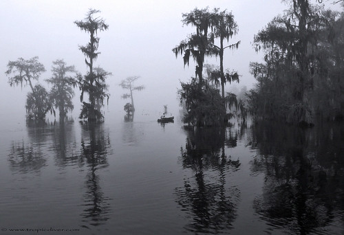 fog lakemartin louisianaswamp