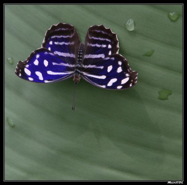 Papillons 05 05 2008