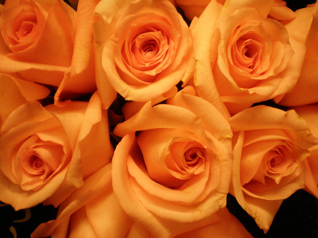 Photo for The meaning of orange roses