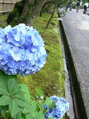 東慶寺(北鎌倉)6月