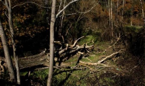 Floresta II