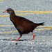 Weka - Photo (c) Andrew Barclay, some rights reserved (CC BY-NC-ND)