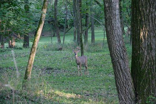 canoneos20d deer indiancreekwoods