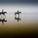 Two equestrian riders, girls on horseback, in low tide reflections on serene Morro Strand State Beach by mikebaird