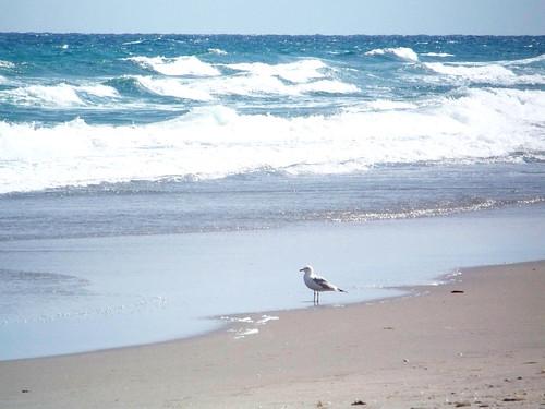 ocean beach florida seagull