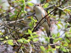 Aurora West Forest Preserve