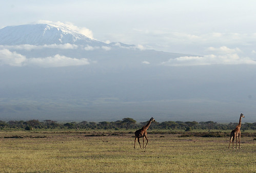 Kilimanjaro and Giraffe