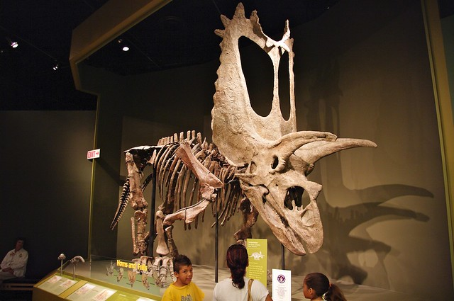 Ou News Sam Noble Museum Of Natural History