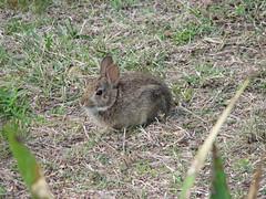 3847 Rabbit