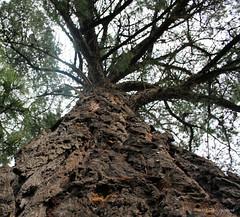 Tree Huggin