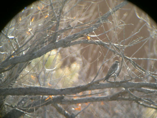 arizona brch martin pict0287 (2)