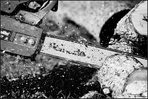 blackandwhite bw white black tree saw nikon pennsylvania explore d200 fa blackdiamond montgomerycounty fekete fehér nikond200 feketefehér blackwhitephotos fűrész