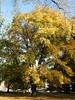 Fall in Parc de la Boverie