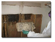 black mold, water damage